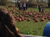 The pumpkin patch (Taken by B, age 6)